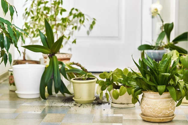 Домашние растения, цветы и пустые горшки на полу.
