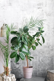 Home plants on grey wall background. modern floral concept of home garden.