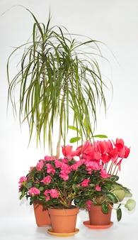 観葉植物は明るい背景でグループ化されます(分離されていません)。 4ショットステッチ画像。