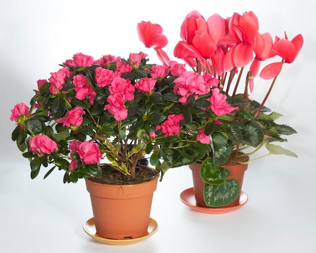 観葉植物は明るい背景でグループ化されます(分離されていません)。