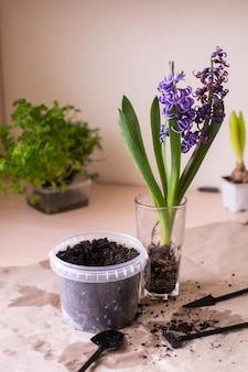 가정 식물 화분 및 원예 도구