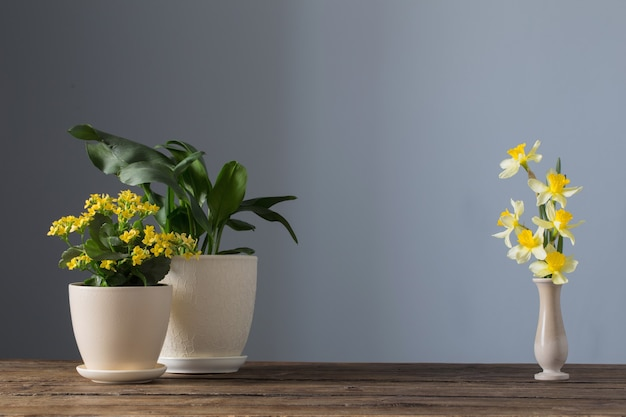 Home plants in pots on wooden table on dark surface