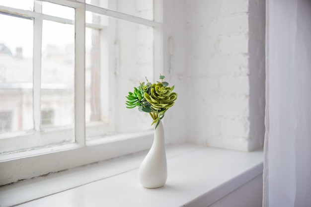 家の植物多肉植物。窓辺に小さな植物。 Premium写真
