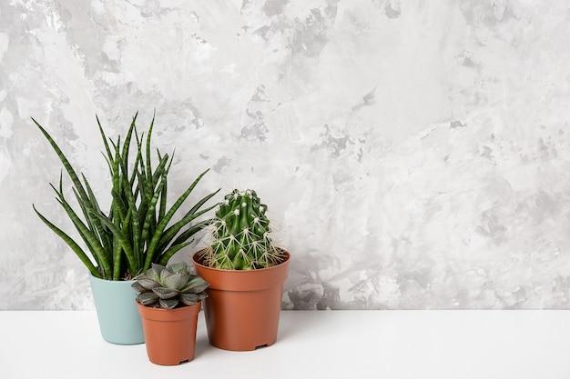 가정 식물. 돌담에 기대어 탁자 위에 있는 갈색 냄비에 다육식물과 선인장. 클로즈업, 정면도.