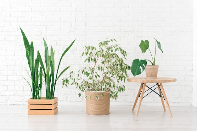 Home plants in a woven jute and wooden basket, white wall, minimalism interior