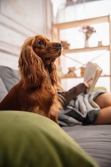 소파에 puppyon와 포옹, 현대 장치, 가제트를 사용 하 고 재미의 집 초상화. 애완 동물의 사랑, 청소년 문화, 가정의 편안함 및 원격 교육 개념.