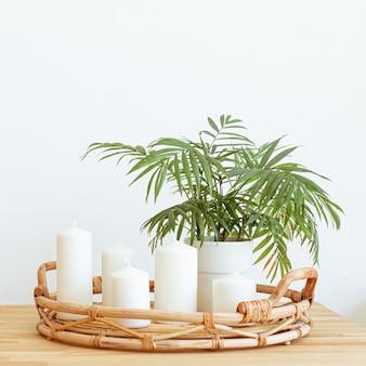 家の静物の背景。テンプレート、モックアップ。緑の植物とシンプルでモダンな居心地の良いインテリア。家の装飾をデザインします。