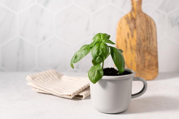 주방 카운터에 금속 머그잔에 직접 재배 한 녹색 바질 친환경 지속 가능한 라이프 스타일