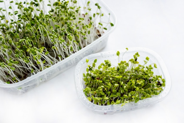 Homegrown microgreens - broccoli sprouts isolated on white background.
