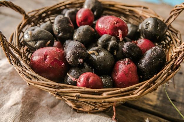 Homegrown organic raw purple vitelotte potato