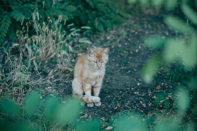 노숙자 버려진 배고프고 손질 된 고양이