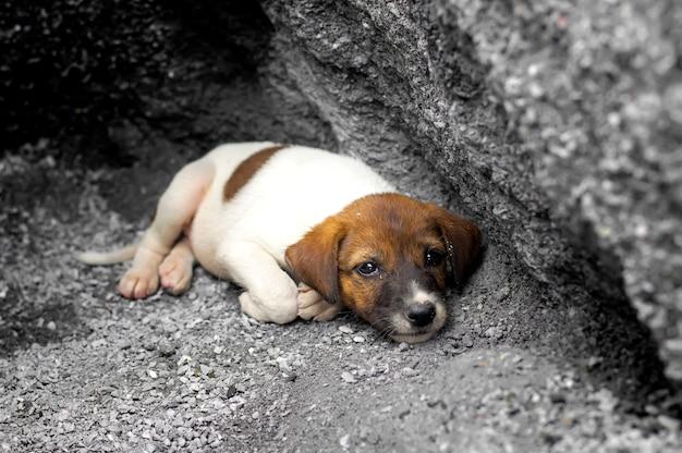 Бездомный и голодный щенок отказался от пребывания в яме