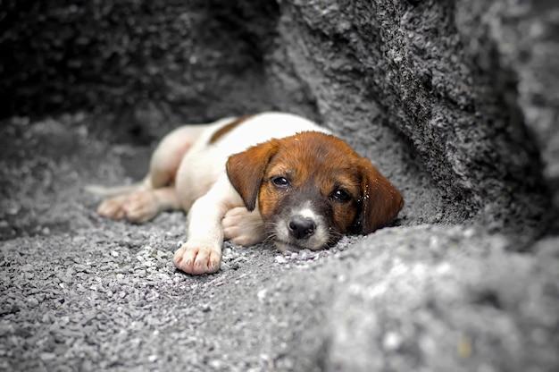 Бездомный и голодный щенок заброшен