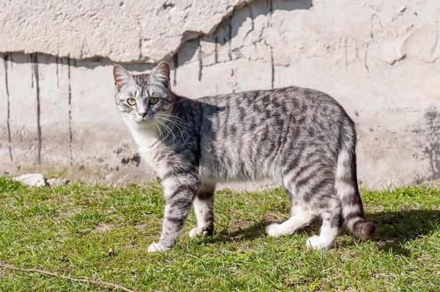 ホームレスの美しい若い猫がグランジの壁の近くに座っています