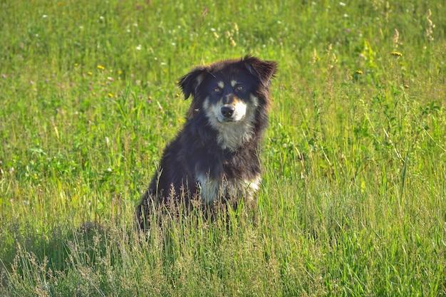草の中に座っているホームレスの黒い犬