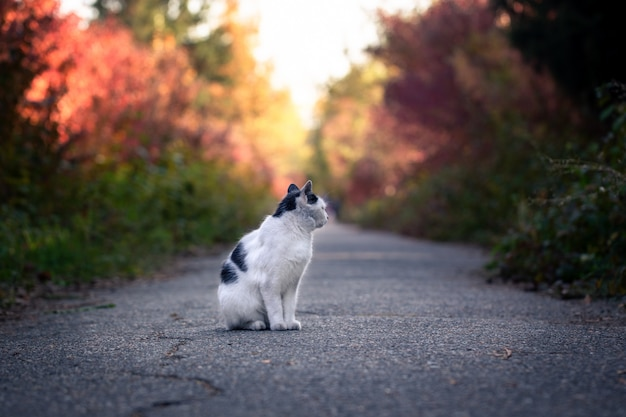 Homeless cat in the autumn park.