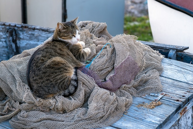 Homeless cat on the fishing net on the boat