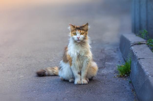 Homeless cat is sitting on the sidewalk