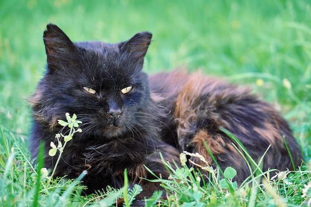 緑の草の上に横たわっているホームレス猫