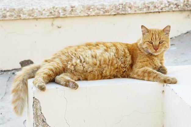 Homeless cat lying on the street