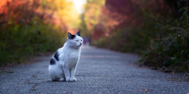 公園の小道にホームレス猫