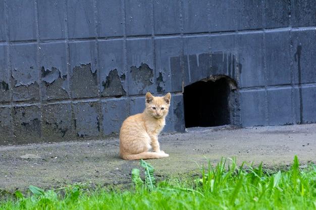 路上のホームレス猫。赤い空腹の孤独な猫が通りに座っています。ホームレスストリートペット