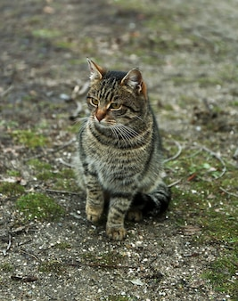 屋外のホームレス猫
