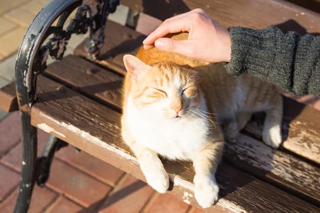 Концепция бездомных кошек, домашних животных и животных. мужчина ласкает голову кошки.