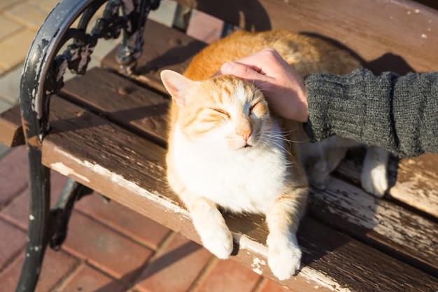 Концепция бездомных кошек, домашних животных и животных. мужчина гладит кошку по голове.