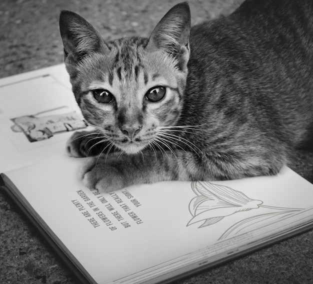 Homeless cat playing book concept