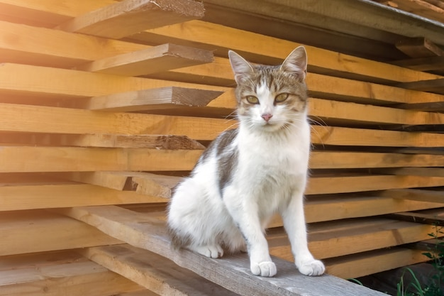 A homeless cat sits on a beam near a mountain of folded boards