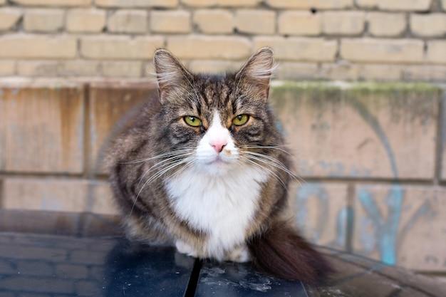 Бездомный кот сидит на машине на улице. горизонтальная рамка