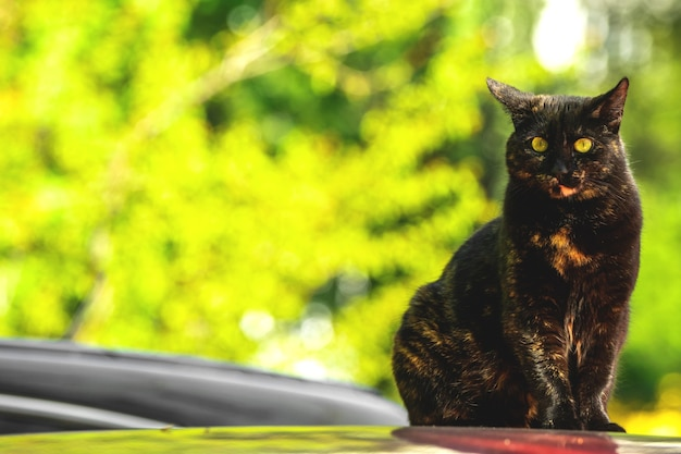 Homeless cat sitting on a red roof of the car, stray animals among us concept photo