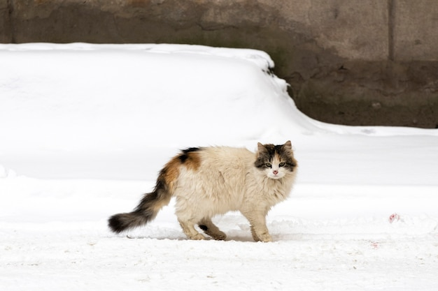 Homeless cat on the street of the city in winter. high quality photo
