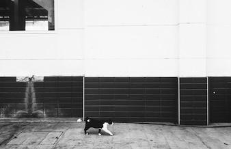 Homeless Cat Walking City Concept