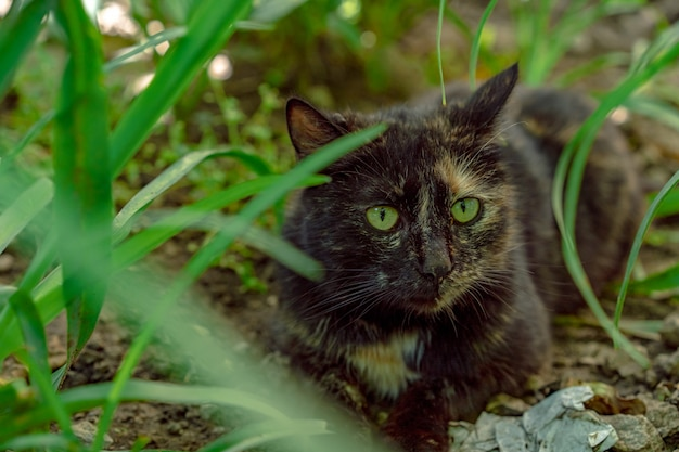 Homeless cat with green eyes.