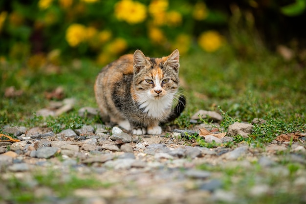 Homeless cat without breed in shelter for a walk on the street
