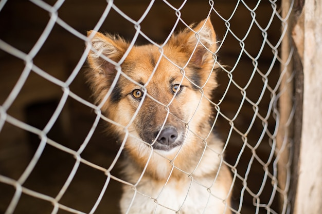 The homeless dog behind the bars looks with huge sad eyes