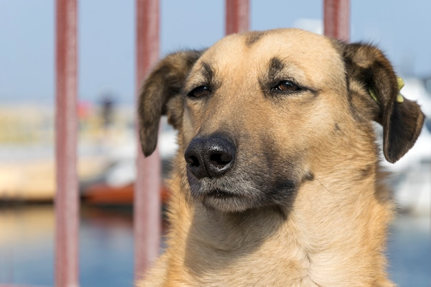 Homeless dog, closeup animal portrait.