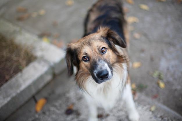 カメラのクローズアップを見てホームレスの犬