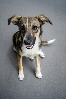 Портрет бездомной собаки