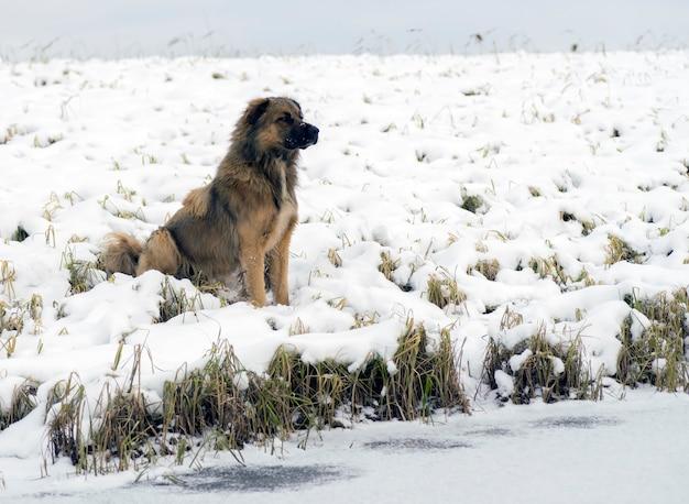 겨울에 호숫가에 앉아 있는 노숙자 개.