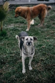 公園を歩いているホームレスの犬