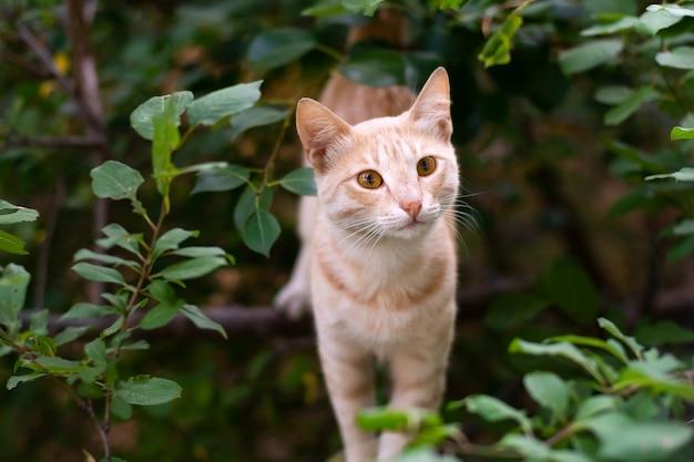 Бездомный рыжий красивая кошка на дереве
