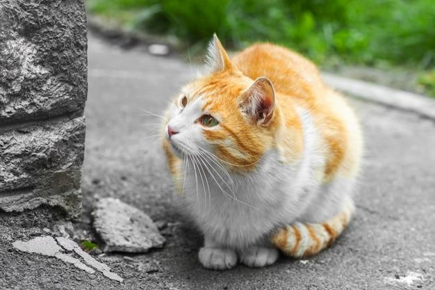 ホームレスの生姜猫が歩道に座っています。背景をぼかした写真