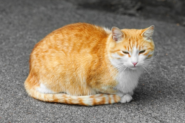Homeless ginger cat is sitting on the sidewalk. blurred background