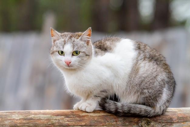 Бездомный серый кот сидит на бревне