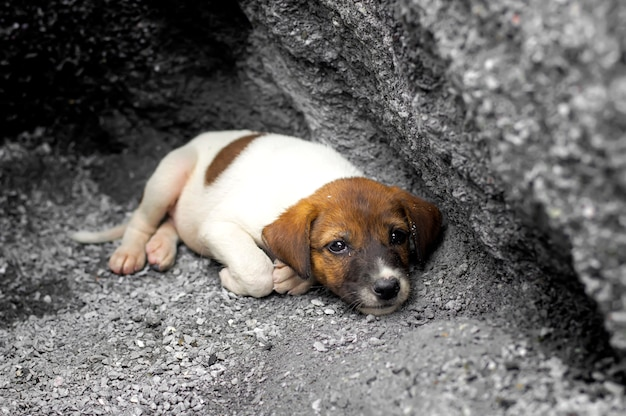 Homeless and hungry puppy abandoned stay at the hole