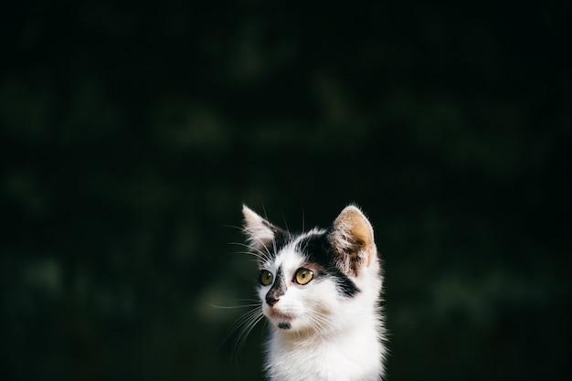 屋外のホームレスの子猫