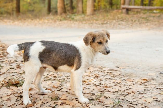 가을 숲길에서 무언가를 기다리는 노숙자 작은 개